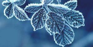 salvare le piante in inverno